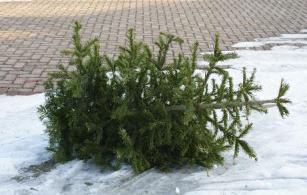 kerstboominzameling(1)