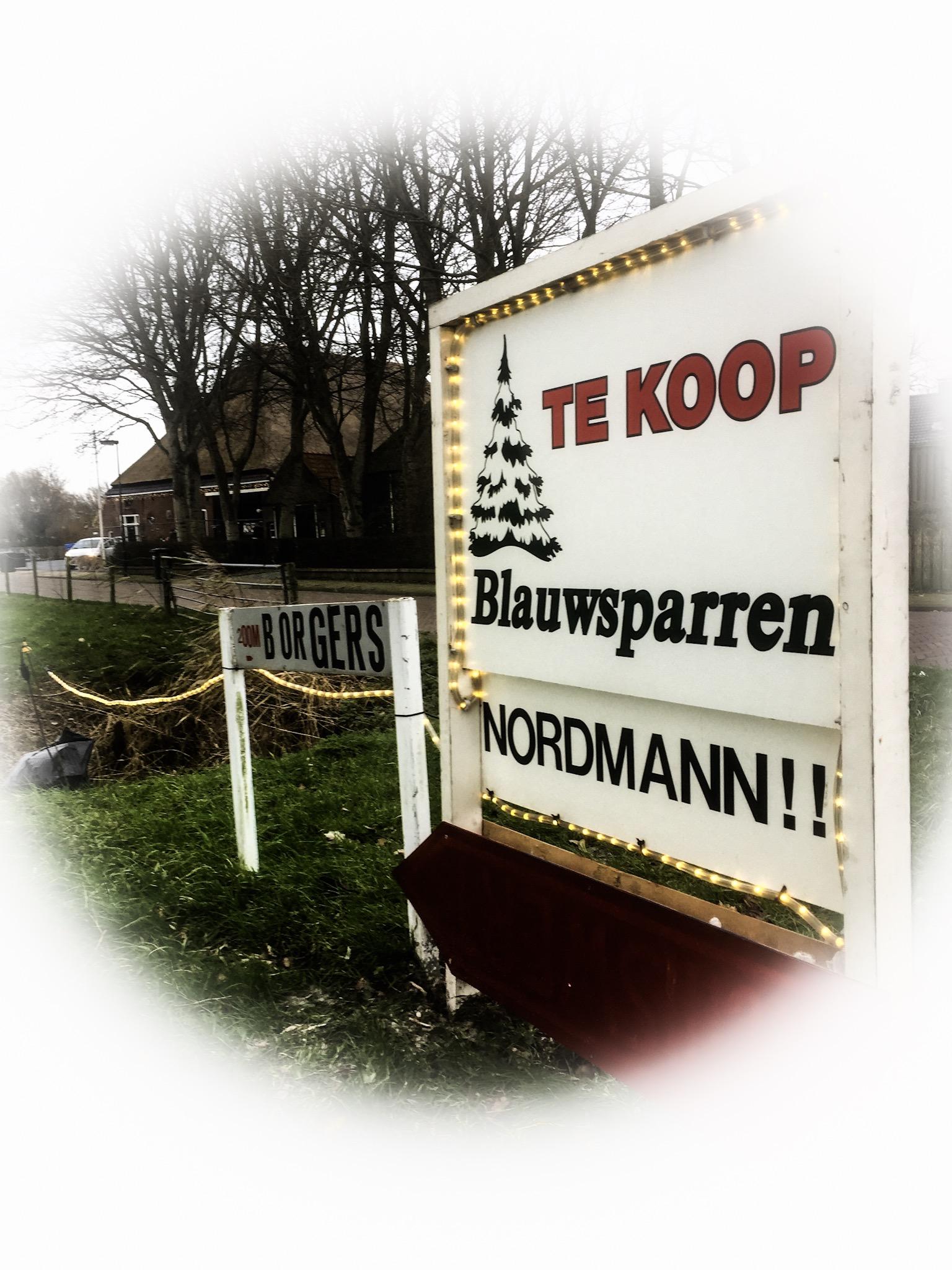 prachtige excellent nordmann kerstboom